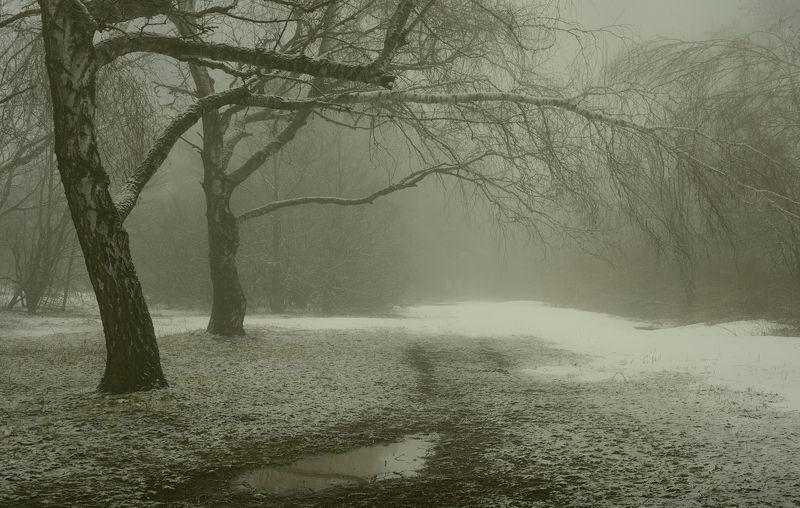 зима туман лес утро Март, опять зимаphoto preview