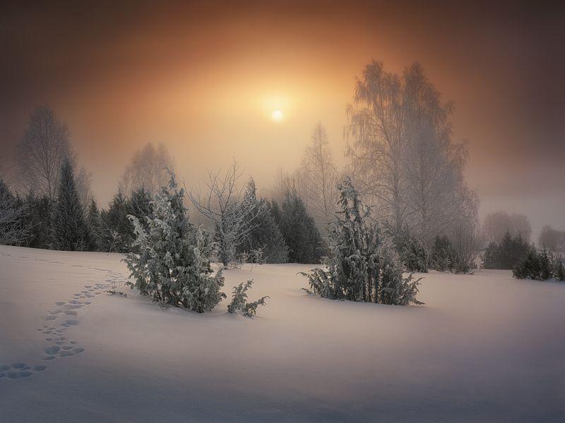 туман, март, изморозь Первый мартовский туманphoto preview