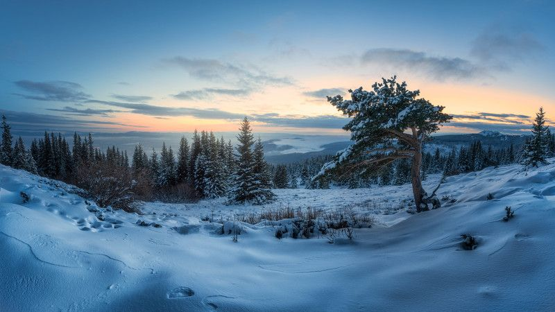 #landscape#nature#winter#tree#snow#sunrise Always therephoto preview