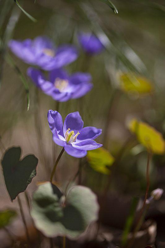весна цветы Музыка Весны фото превью