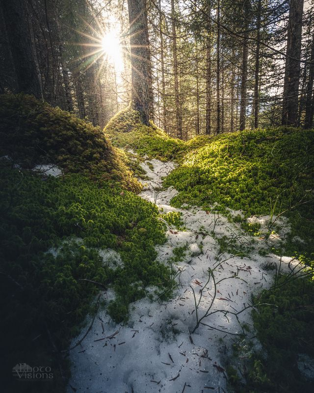 forest,woods,woodland,boreal,norway,norwegian,scandinavia,scandinavian,spring Spring sun in the forest floorphoto preview