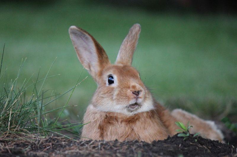 Кроликphoto preview
