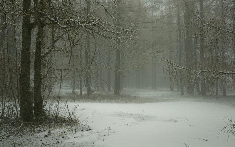 зима туман лес утро Туманный мартphoto preview