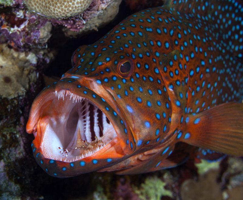 египет хургада подводный мир дайвинг На приеме у дантиста photo preview