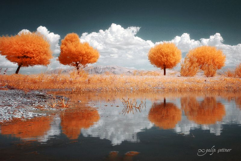 landscape, tree, trees, infrared, cloud Infrared treesphoto preview