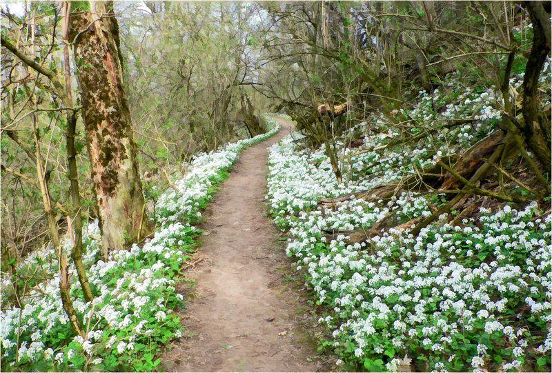 весна, тропа, лес Весна идет - весне дорогу!photo preview