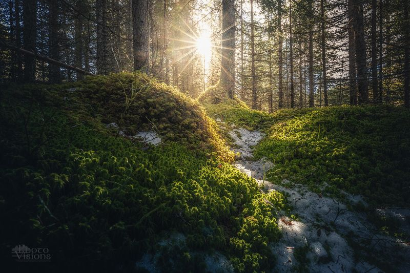 sun,forest,woodland,woodlands,woods,boreal,norway,norwegian,tree,trees, Springtime sun and moodphoto preview