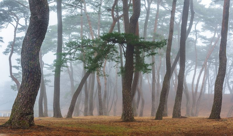 forest, place, korea, trees Misty fine forest of seowonphoto preview