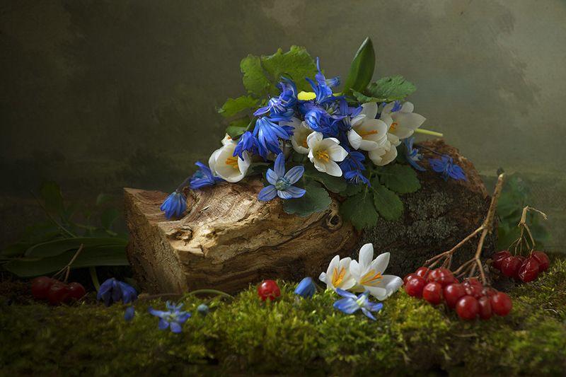 натюрморт с с пролесками,весна,букет,голубые,синие цветы,художественное фото,искусство. Лесная сказкаphoto preview