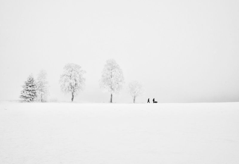 Black & White, winter, people, animals, dog, walk, trees, frost, cold, Norway, white, snow,  На прогулкуphoto preview