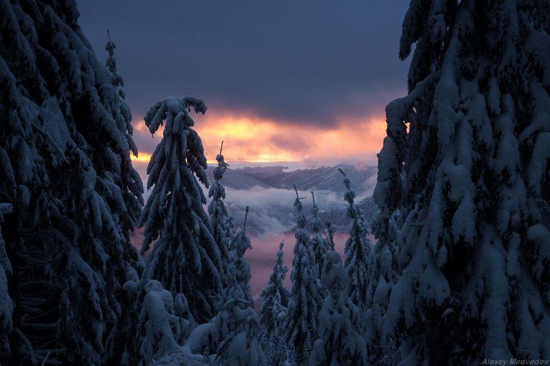гори, закарпаття, зима, карпати, свидовець, смереки, сутінки, лопухів Сонныеphoto preview