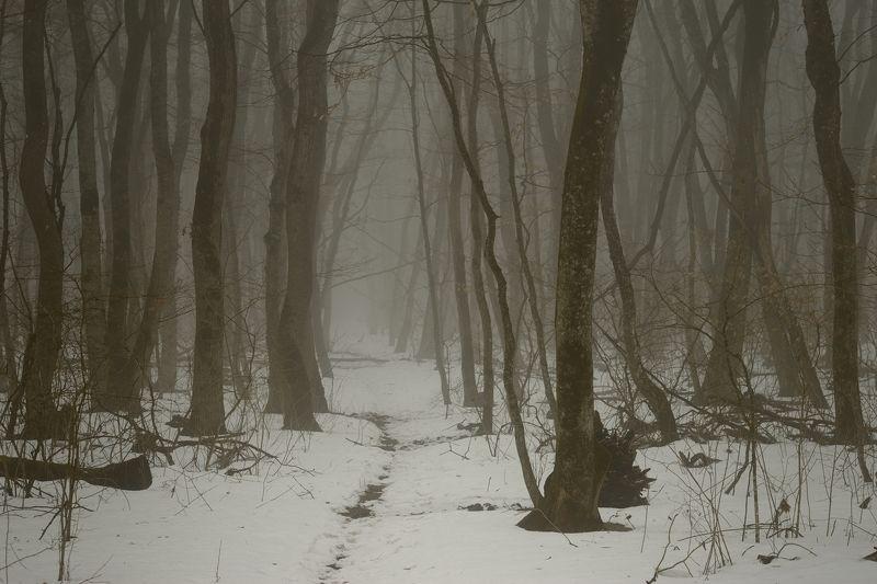 весна туман лес утро Туманная веснаphoto preview