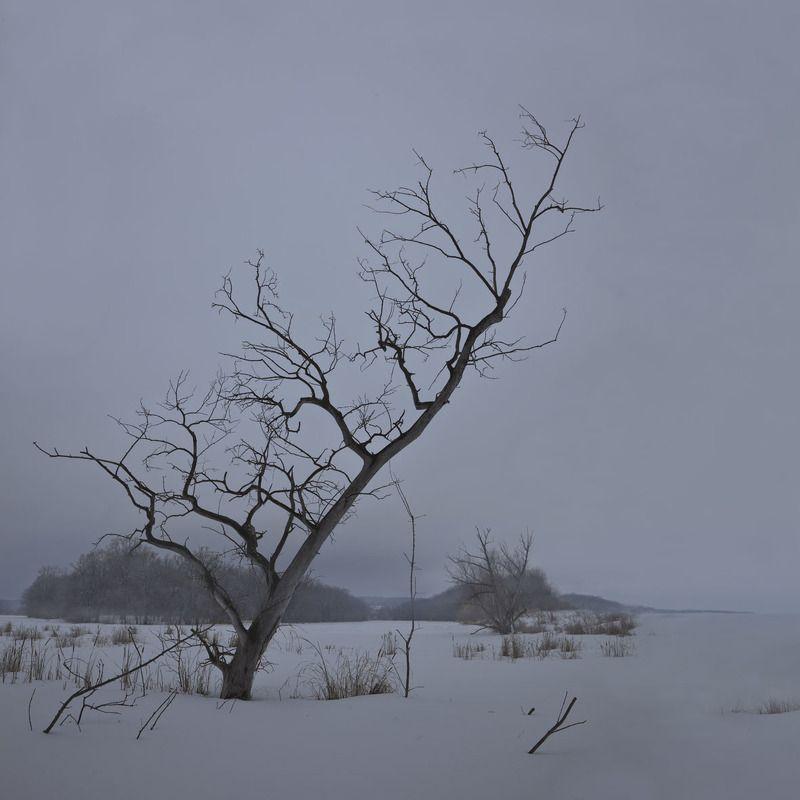 дерево зима Деревоphoto preview