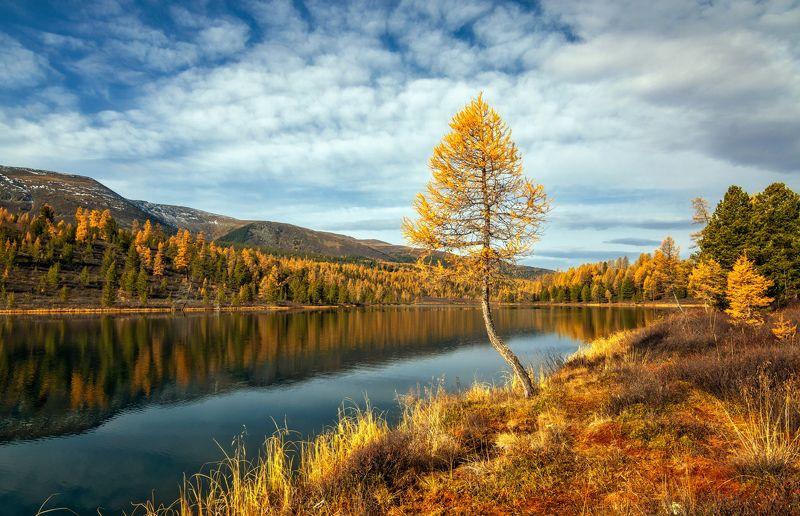 горный алтай,улаганский район,озеро кок-кёль Стремление к небу...photo preview