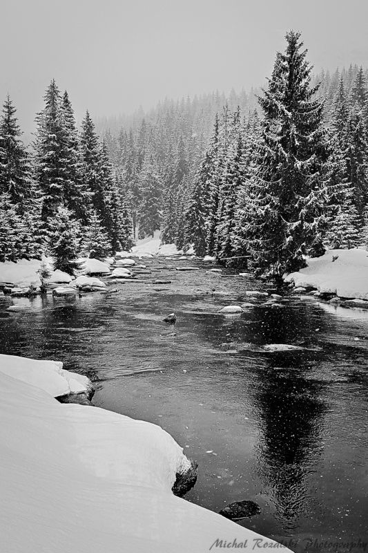 winter, ,season, ,blackandwhite, ,snow, ,landscape, ,trees, ,stream, ,photography In the mood of the winter seasonphoto preview