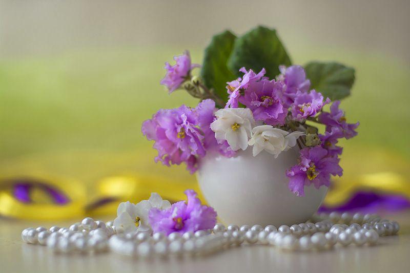 натюрморт с сенполиями,весна,букет,цветы,художественное фото,искусство. Букетик сиреневых сенполийphoto preview
