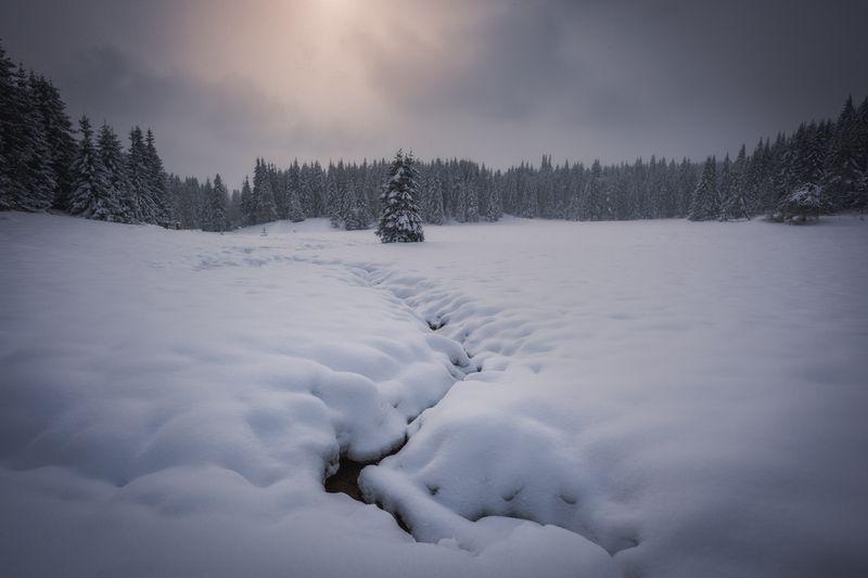 #landscape#nature#winter Soft winterphoto preview