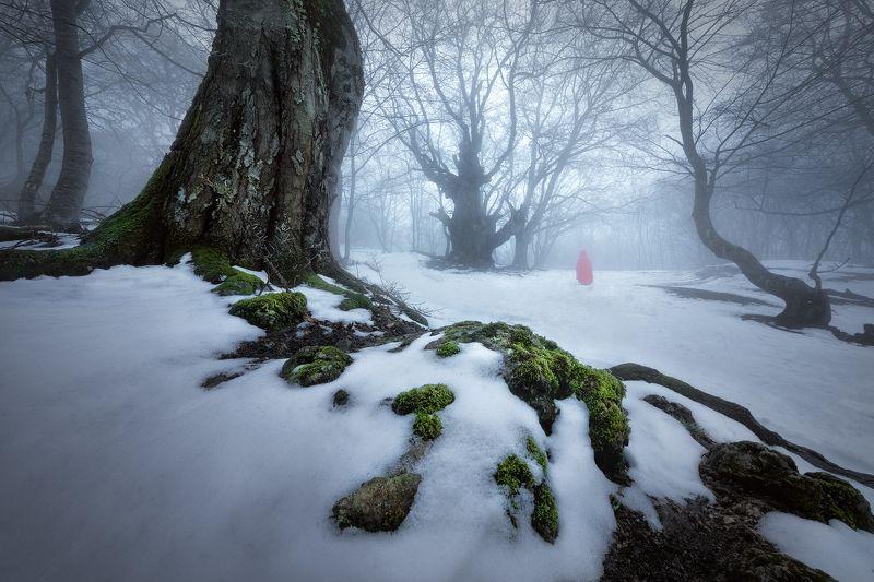 Сумрачный лес фото превью