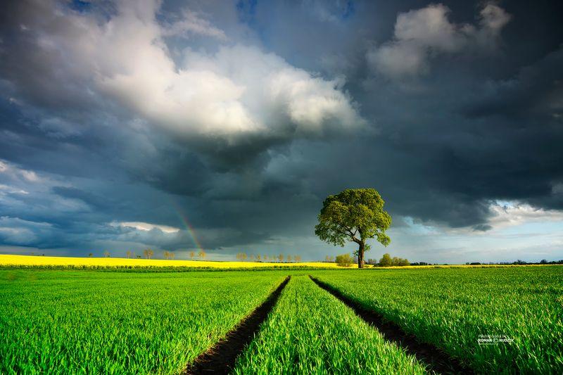 Field landscape, Kociewie, Poland, tree, landscape, clouds, rainbow, spring Field landscape фото превью