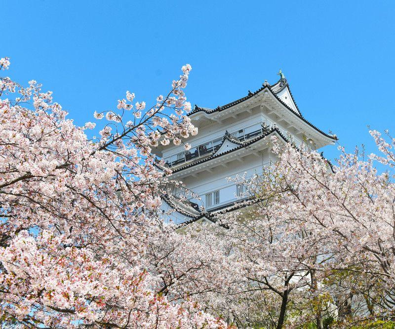 Sakura Blossomphoto preview