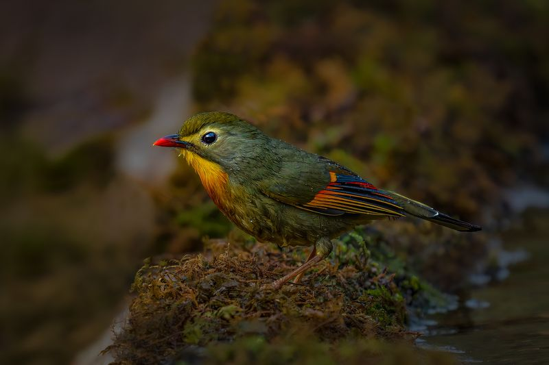 #birds Leave me alone...!photo preview