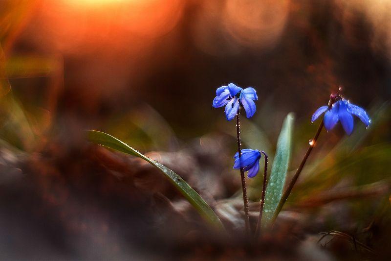 макро, цветы, вчувствование, созерцание, тишина, лес, первоцветы, природа  \'Hold on to You\'/\'Держаться за Тебя\'photo preview