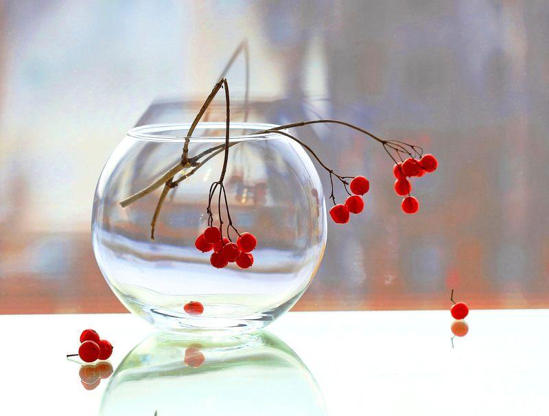 натюрморт, фотонатюрморт, зима, окно, калина, наталья казанцева Этюдик с грустинкойphoto preview