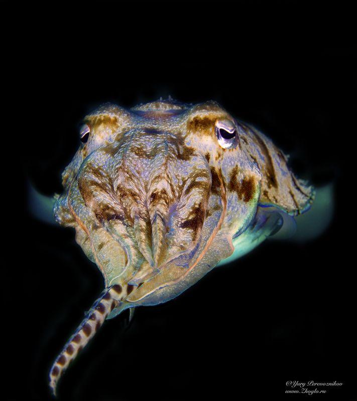 подводное фото египет хургада дайвинг Какой вкусный угорьphoto preview