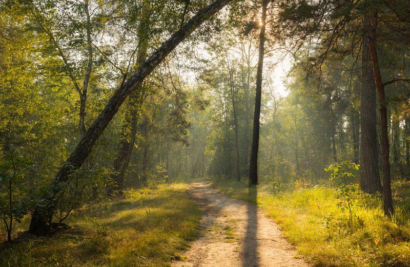 осень, сентябрь, утро, рассвет Теплое утро сентябряphoto preview