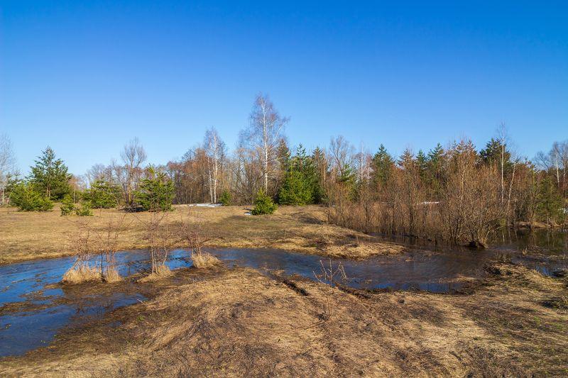 лес, весна, природа, ручей photo preview