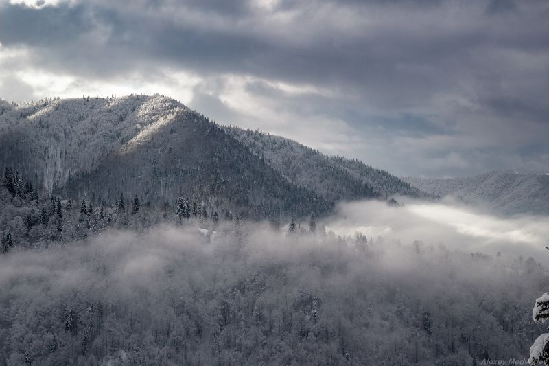гори, закарпаття, зима, карпати, свидовець, смереки, сутінки, лопухів, лопухов, усть чорна, карпаты, Туманы блуждающиеphoto preview