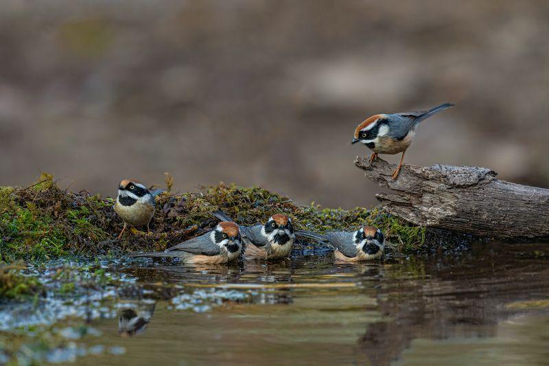 #birds Yep Hurry.......!photo preview