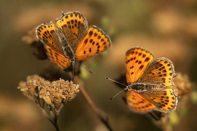 макро, бабочка Посидим поохаем...photo preview