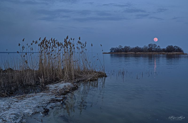 полнолуние, река, восход, март, дорожка, камыш Розовое полнолуние марта фото превью