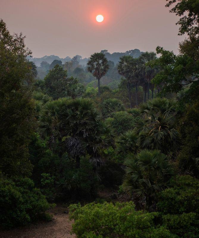 камбоджа, азия, джунгли, закат, путешествие, природа, пейзаж, солнце, cambodia, asia, nature, travel, sunset, jungle Закат в джунглях Камбоджи.photo preview