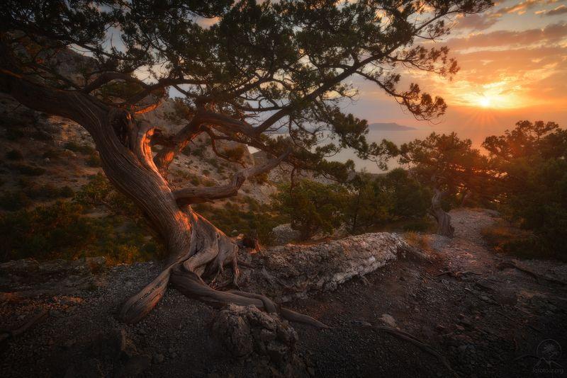 крым, горы, море, дерево Виды Нового Светаphoto preview
