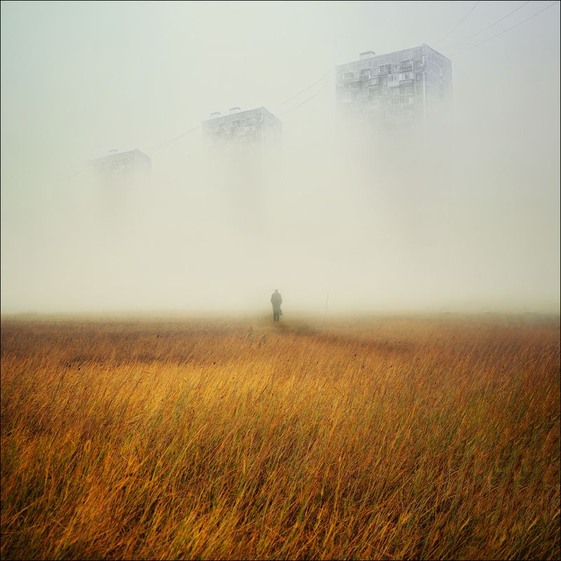 туман, ёжик, лошадка ***photo preview