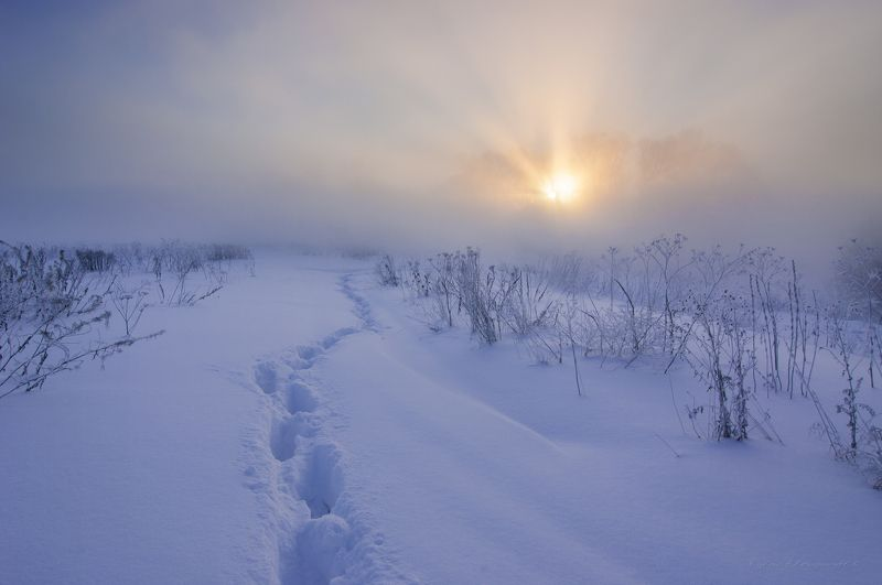 туман, московская область, утро, природа, пейзаж, зима, мороз, солнце Морозное утро на р. Истраphoto preview