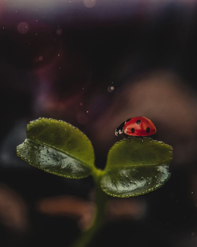 макро, арт,природа ,насекомые На лимонеphoto preview