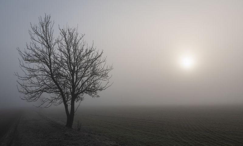 Туманное солнцеphoto preview