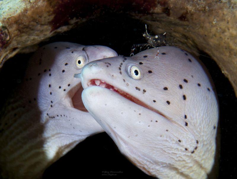 подводный мир подводное фото  дружная семейкаphoto preview
