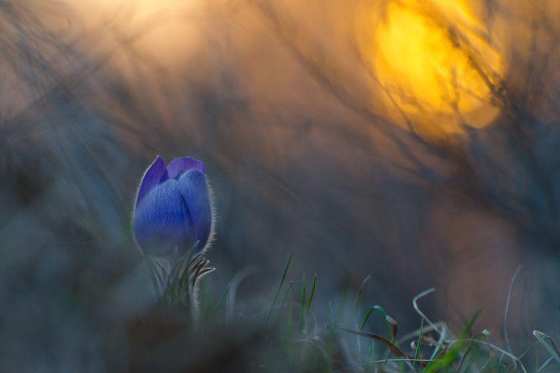 сон - трава, вечер, весна На склоне весеннего дняphoto preview