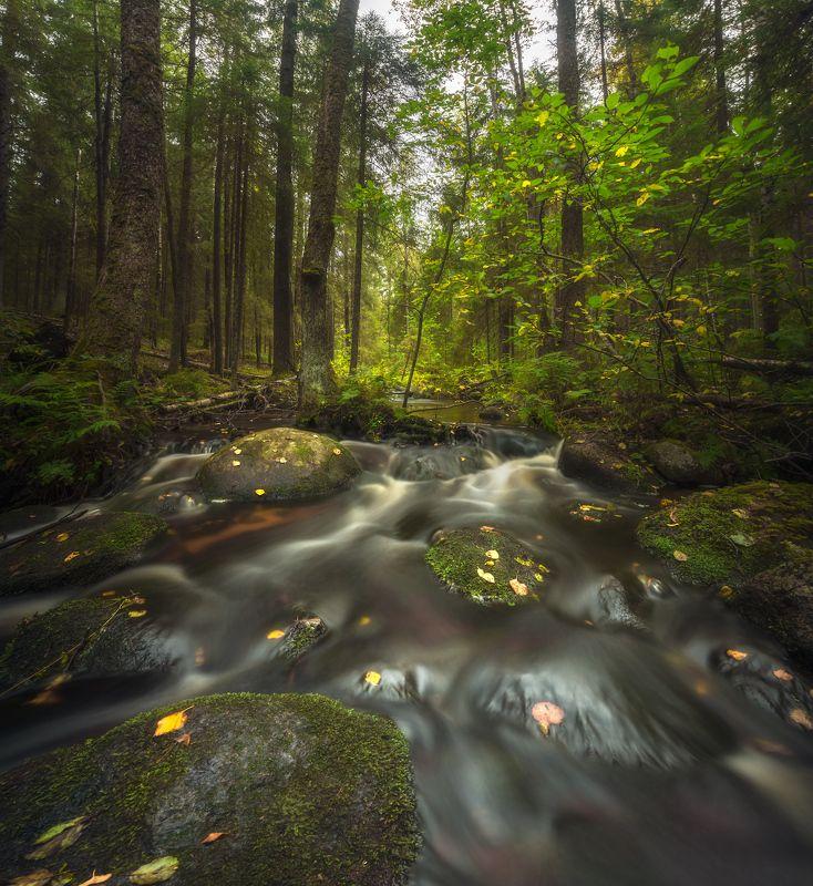 лес, ручей, осень ***photo preview