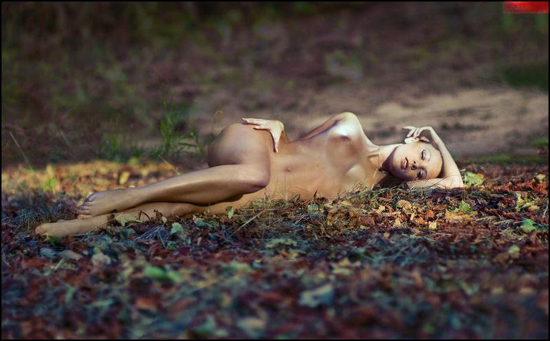 Fallen autumn ©photo preview