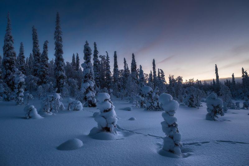паанаярви, карелия, вечер, зимний пейзаж В гостях у Снежной королевыphoto preview