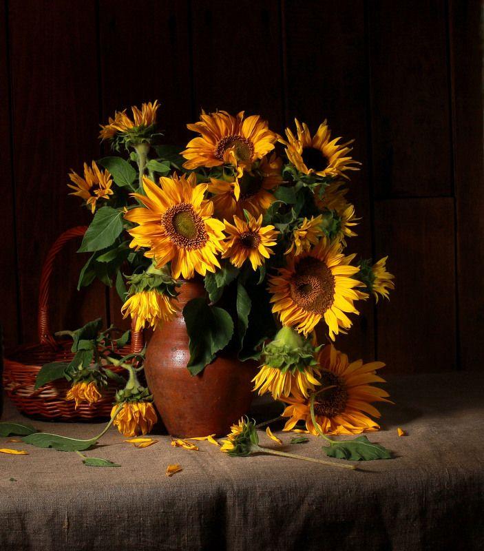 натюрморт, фотонатюрморт, лето, подсолнухи, наталья казанцева Не Ван Гогphoto preview