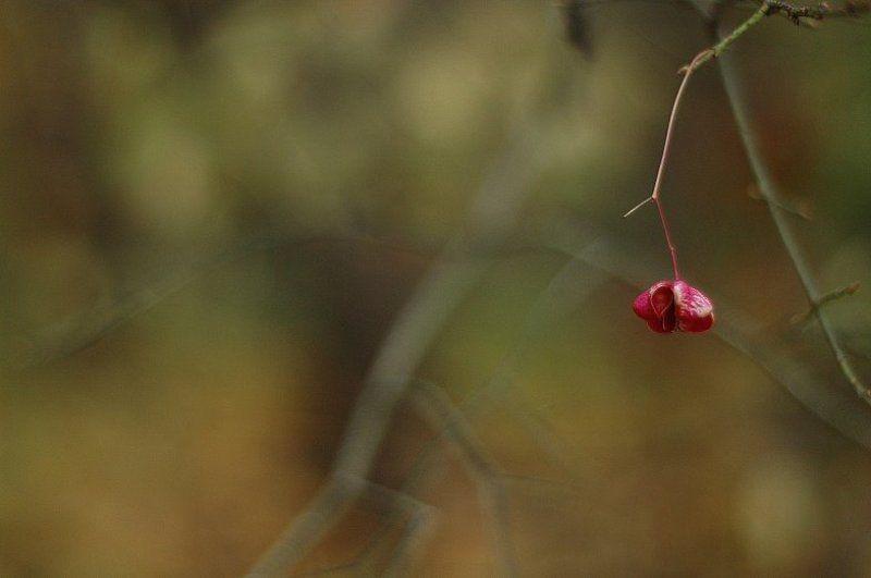 осень, цветок Минимализмphoto preview
