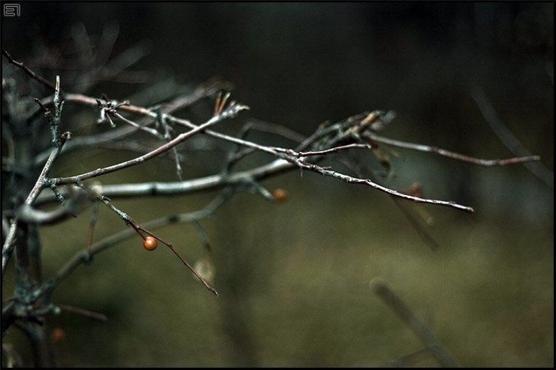 осень, ветви, холод Голые ветвиphoto preview