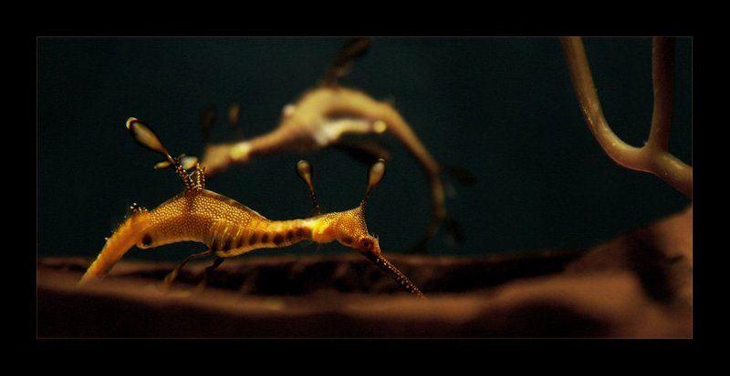 морской, дракон наперегонкиphoto preview