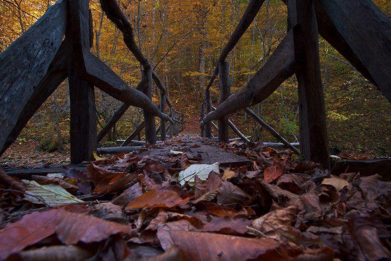осень Мезмайские , осенниеphoto preview